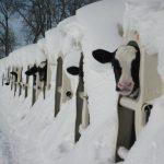 EXL_sneeuw